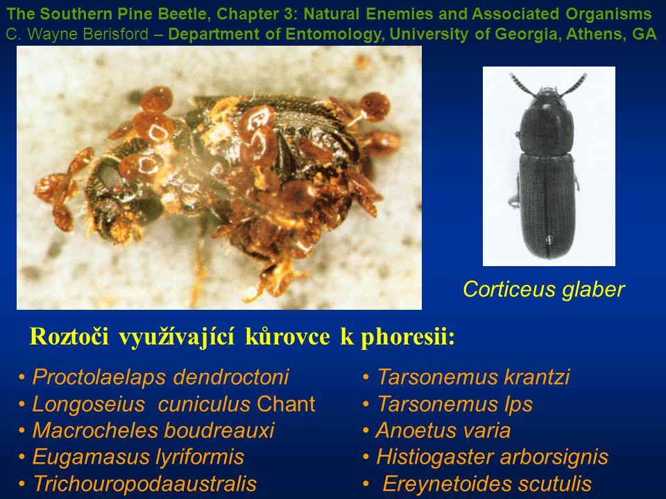 Proctolaelaps dendroctoni Longoseius cuniculus Chant Macrocheles boudreauxi Eugamasus lyriformis Trichouropodaaustralis Tarsonemus krantzi Tarsonemus