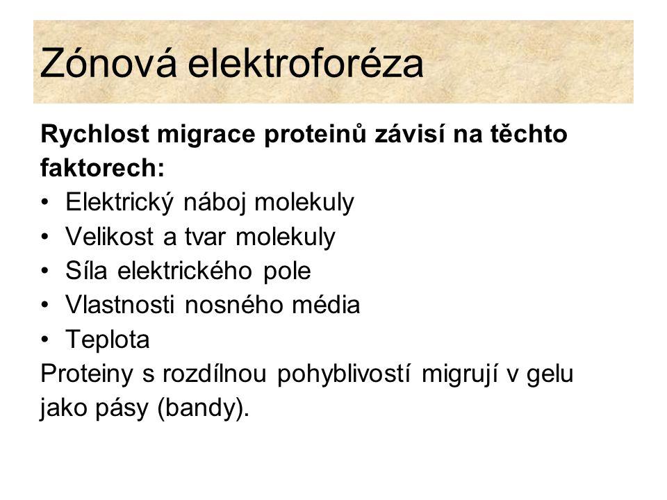 Zónová elektroforéza Rychlost migrace proteinů závisí na těchto faktorech: Elektrický náboj molekuly Velikost a tvar molekuly Síla elektrického pole V