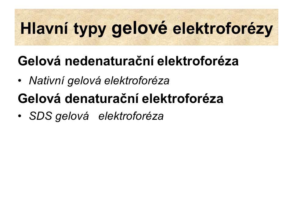 Gelová nedenaturační elektroforéza Nativní gelová elektroforéza probíhá bez denaturačních činidel někdy jsou používany relativně vysoké, nebo nízké hodnoty pH Migrace proteinů gelem závisí na jejich náboji, velikosti a tvaru.