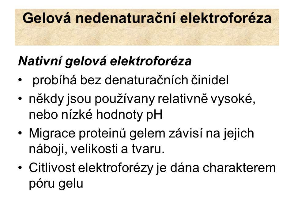 Nativní gelová elektroforéza Faktory ovlivňují mobilitu proteinů v nativním gelu: Náboj proteinu: sekvence aminokyselin – počet kyselých a bazických zbytků pH roztoku třírozměrná struktura proteinu Velikost a tvar proteinu Koncentrace a stupeň zesíťování gelu gel obecně snižuje mobilitu proteinů, v závislosti na jejich volné pohyblivosti (bez přítomnosti gelu) větší molekuly jsou gelem ovlivněny vice než menší molekuly složení gelu může být ovlivněno tak, že dělení probíhá na základě rozdílné velikosti molekul