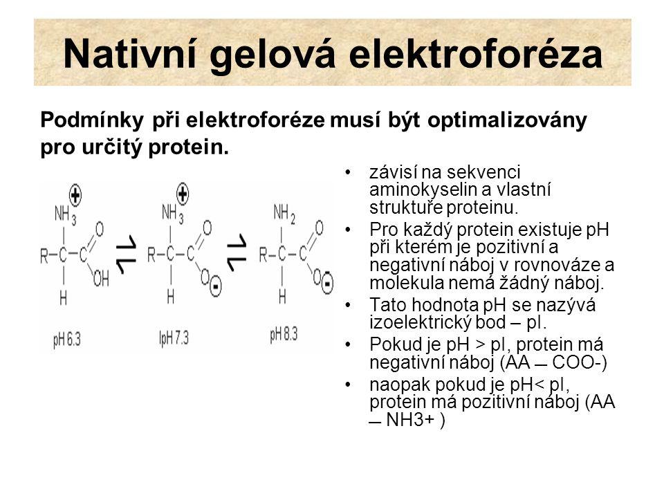 Nativní gelová elektroforéza Podmínky při elektroforéze musí být optimalizovány pro určitý protein. závisí na sekvenci aminokyselin a vlastní struktuř
