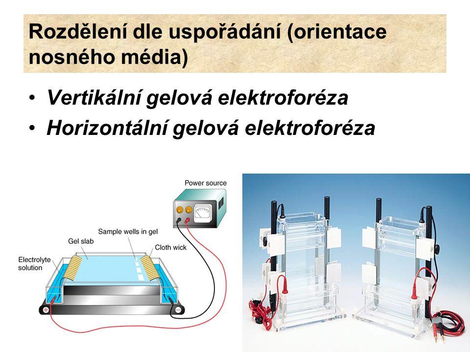Rozdělení dle uspořádání (orientace nosného média) Vertikální gelová elektroforéza Horizontální gelová elektroforéza