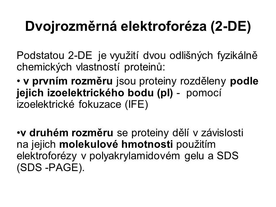 Dvojrozměrná elektroforéza (2-DE) Podstatou 2-DE je využití dvou odlišných fyzikálně chemických vlastností proteinů: v prvním rozměru jsou proteiny ro