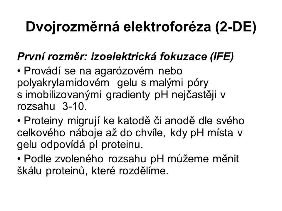 Dvojrozměrná elektroforéza (2-DE) První rozměr: izoelektrická fokuzace (IFE) Provádí se na agarózovém nebo polyakrylamidovém gelu s malými póry s imob