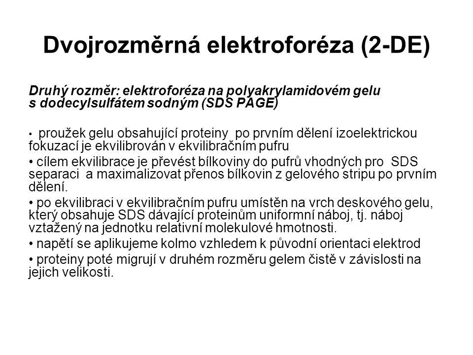 Dvojrozměrná elektroforéza (2-DE) Druhý rozměr: elektroforéza na polyakrylamidovém gelu s dodecylsulfátem sodným (SDS PAGE) proužek gelu obsahující pr