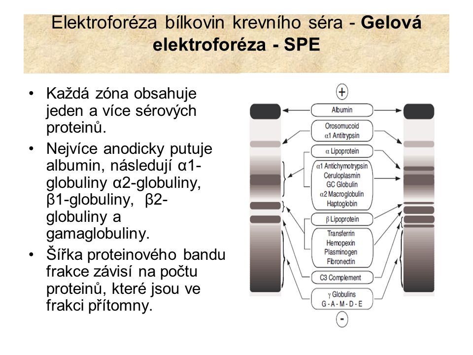 Elektroforéza bílkovin krevního séra - Gelová elektroforéza - SPE Každá zóna obsahuje jeden a více sérových proteinů. Nejvíce anodicky putuje albumin,