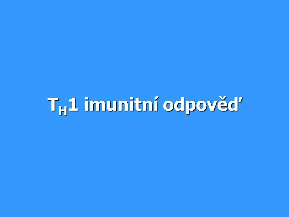T H 1 imunitní odpověď
