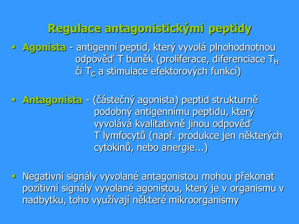 Regulace antagonistickými peptidy  Agonista - antigenní peptid, který vyvolá plnohodnotnou odpověď T buněk (proliferace, diferenciace T H či T C a st