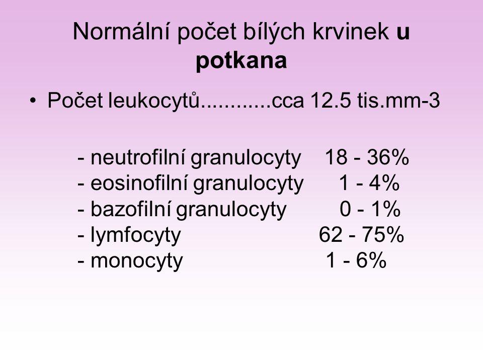 Diferenciální rozpočet bílých krvinek v nátěru obarveném Leukodifem Počet jednotlivých druhů se určuje nejméně na 100, přesněji na 200 leukocytů  procentuelní zastoupení Polymorphonucleární granulocytyMononucleární agranulocyty NeutrofilEosinofilBasofilMonocytLymphocyt