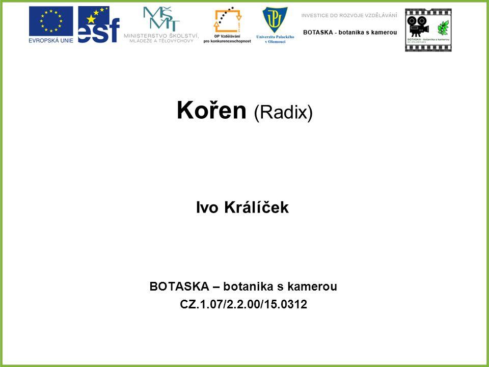 Kořen (Radix) BOTASKA – botanika s kamerou CZ.1.07/2.2.00/15.0312 Ivo Králíček