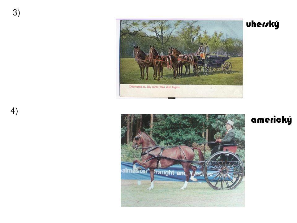 uherský americký 3) 4)
