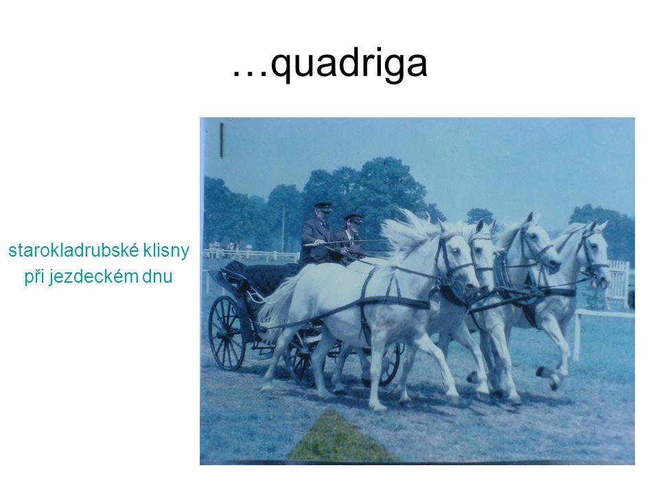 …quadriga starokladrubské klisny při jezdeckém dnu