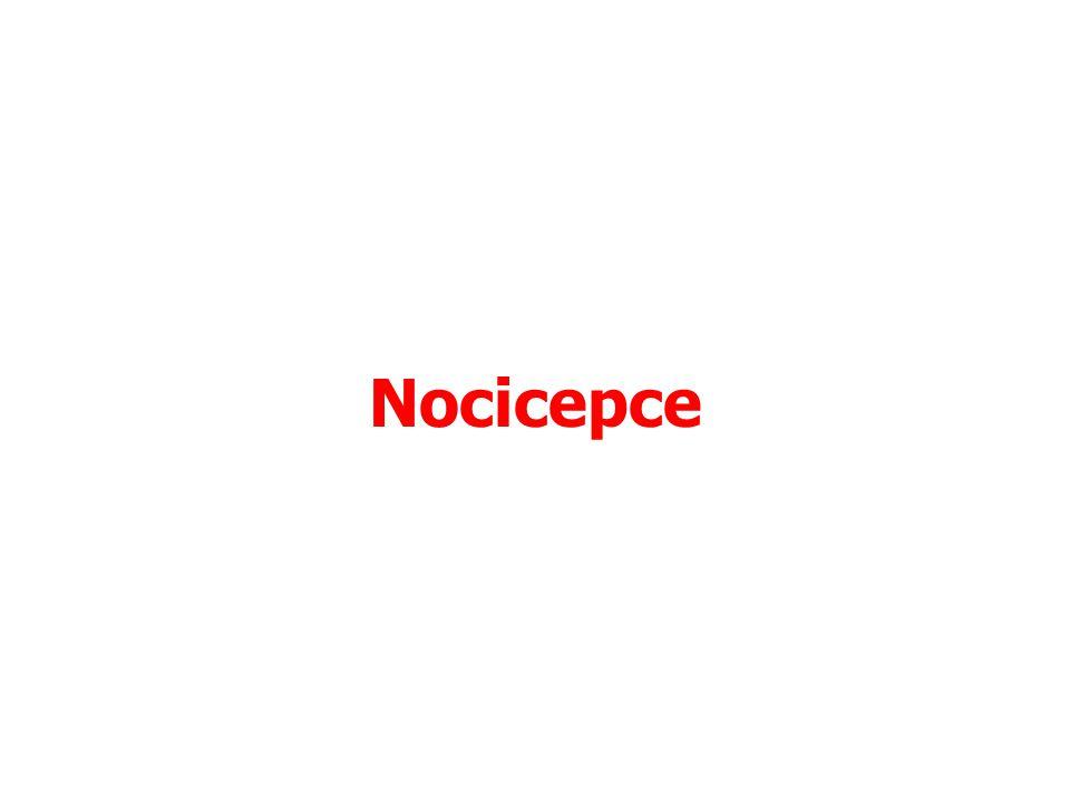 Nociceptory Volná nervová zakončení Aktivována –Škodlivými podněty aplikovanými na periferní tláně –Zánětlivými procesy Někdy, ale ne vždy, vede aktivace nociceptorů k bolestivému vjemu