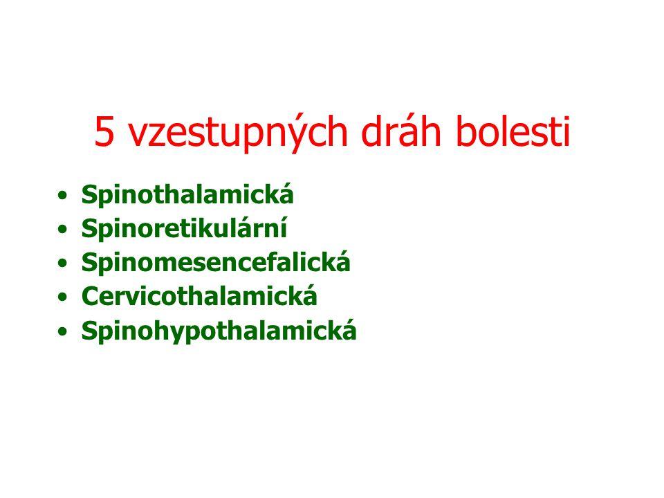 5 vzestupných dráh bolesti Spinothalamická Spinoretikulární Spinomesencefalická Cervicothalamická Spinohypothalamická