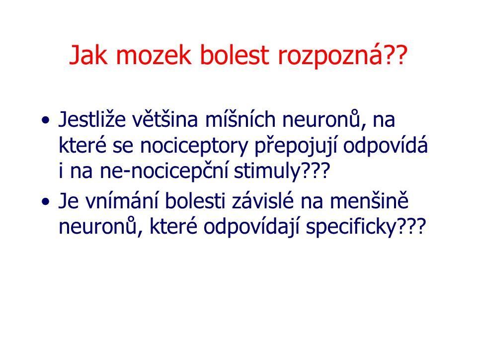 Jak mozek bolest rozpozná?? Jestliže většina míšních neuronů, na které se nociceptory přepojují odpovídá i na ne-nocicepční stimuly??? Je vnímání bole