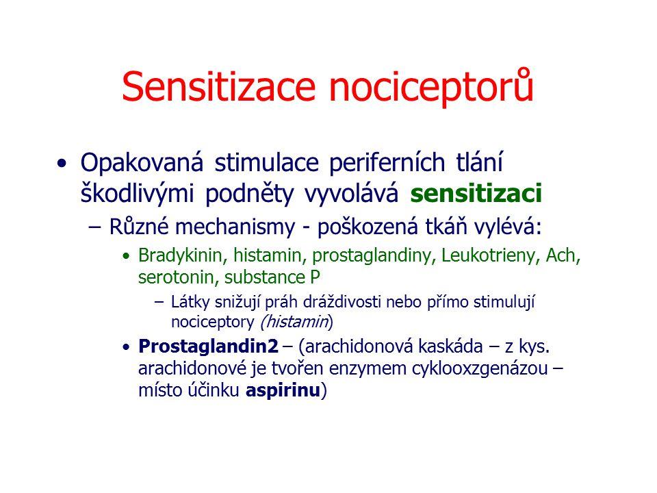 Sensitizace nociceptorů Opakovaná stimulace periferních tlání škodlivými podněty vyvolává sensitizaci –Různé mechanismy - poškozená tkáň vylévá: Brady