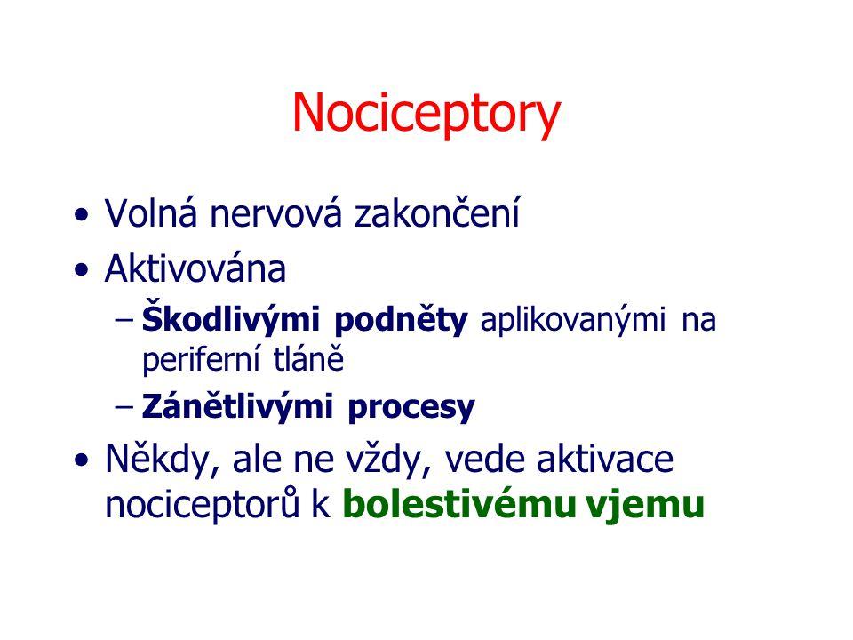 Nociceptory Volná nervová zakončení Aktivována –Škodlivými podněty aplikovanými na periferní tláně –Zánětlivými procesy Někdy, ale ne vždy, vede aktiv