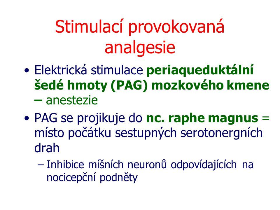 Stimulací provokovaná analgesie Elektrická stimulace periaqueduktální šedé hmoty (PAG) mozkového kmene – anestezie PAG se projikuje do nc. raphe magnu