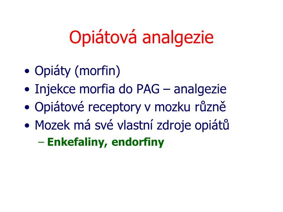 Opiátová analgezie Opiáty (morfin) Injekce morfia do PAG – analgezie Opiátové receptory v mozku různě Mozek má své vlastní zdroje opiátů –Enkefaliny,