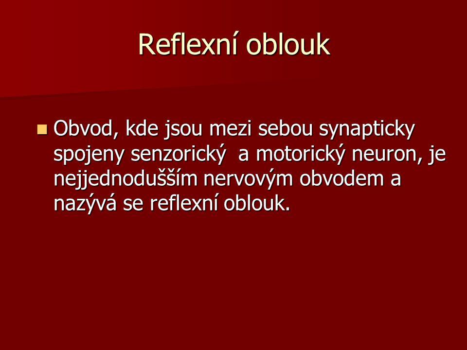 Reflexní oblouk Obvod, kde jsou mezi sebou synapticky spojeny senzorický a motorický neuron, je nejjednodušším nervovým obvodem a nazývá se reflexní o