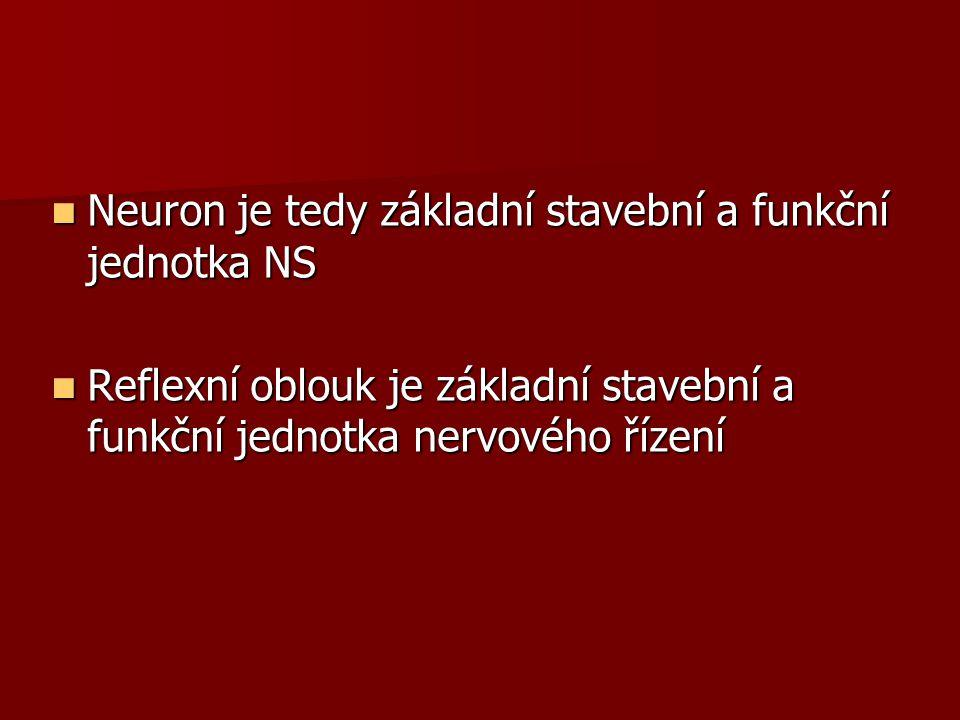 Neuron je tedy základní stavební a funkční jednotka NS Neuron je tedy základní stavební a funkční jednotka NS Reflexní oblouk je základní stavební a f