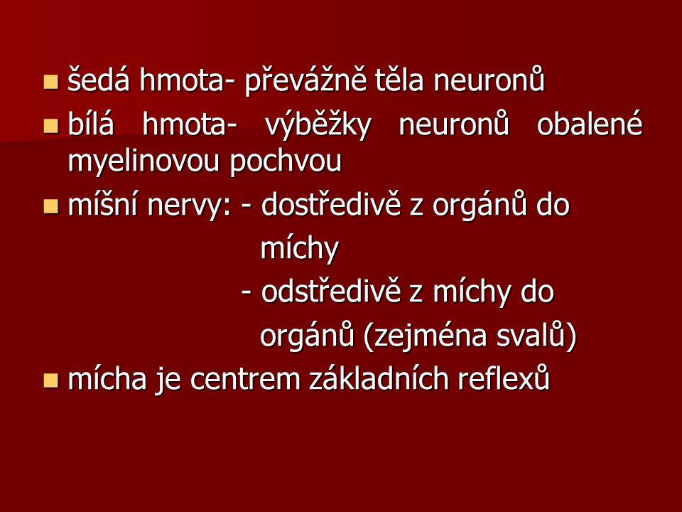 šedá hmota- převážně těla neuronů šedá hmota- převážně těla neuronů bílá hmota- výběžky neuronů obalené myelinovou pochvou bílá hmota- výběžky neuronů