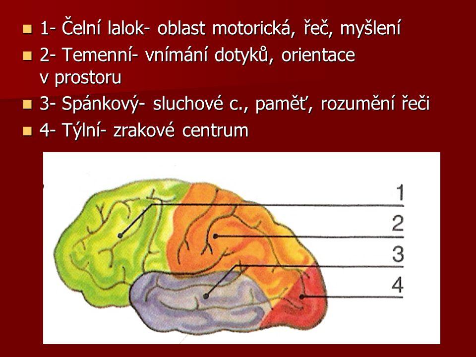 1- Čelní lalok- oblast motorická, řeč, myšlení 1- Čelní lalok- oblast motorická, řeč, myšlení 2- Temenní- vnímání dotyků, orientace v prostoru 2- Teme