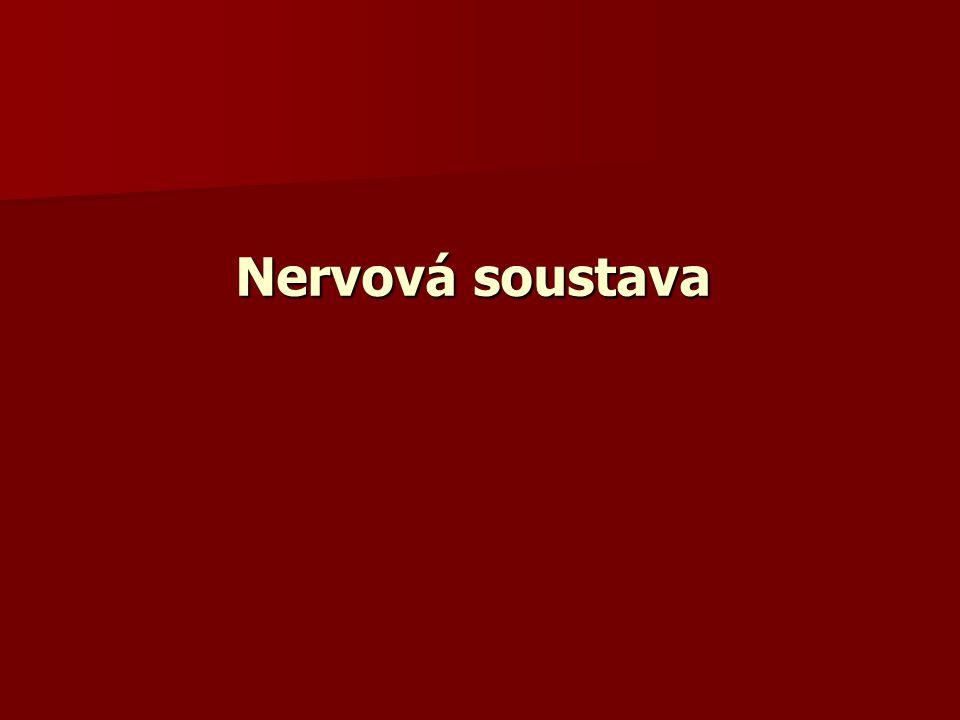 Neuron je tedy základní stavební a funkční jednotka NS Neuron je tedy základní stavební a funkční jednotka NS Reflexní oblouk je základní stavební a funkční jednotka nervového řízení Reflexní oblouk je základní stavební a funkční jednotka nervového řízení