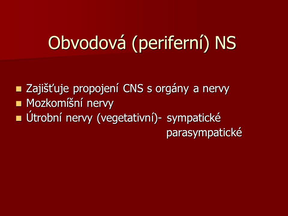 Obvodová (periferní) NS Zajišťuje propojení CNS s orgány a nervy Zajišťuje propojení CNS s orgány a nervy Mozkomíšní nervy Mozkomíšní nervy Útrobní ne