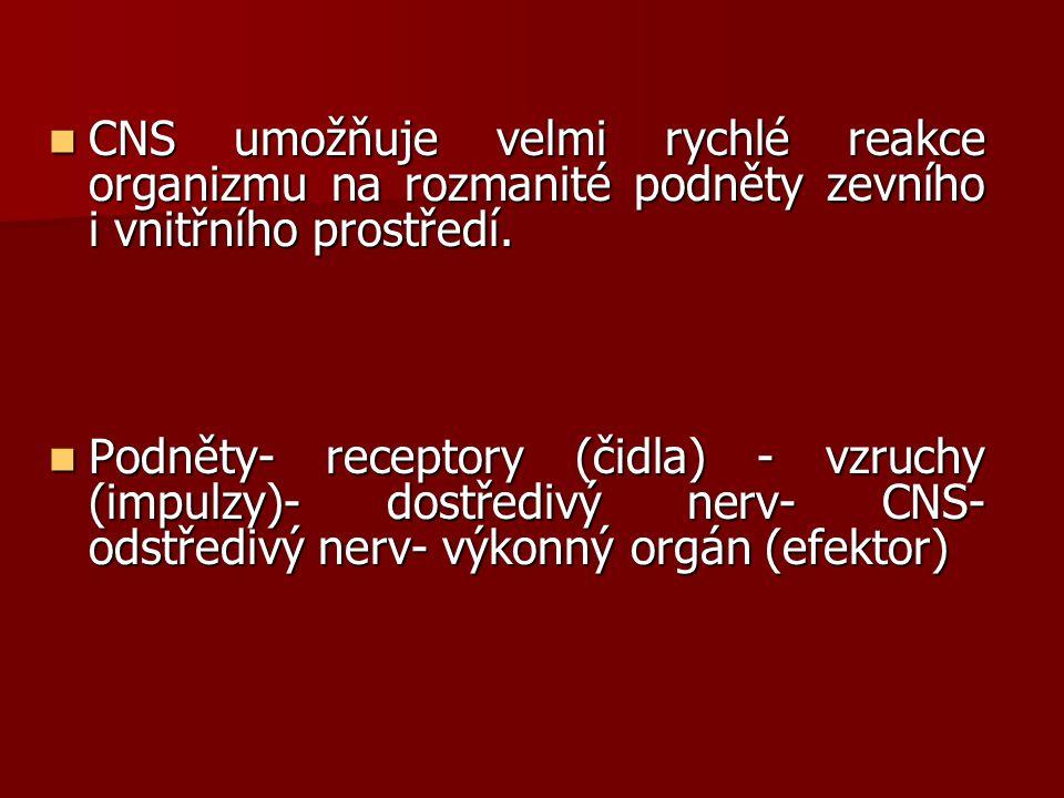 Řídící funkce nervové soustavy: řízení kosterního svalstva řízení kosterního svalstva řízení vnitřních orgánů řízení vnitřních orgánů