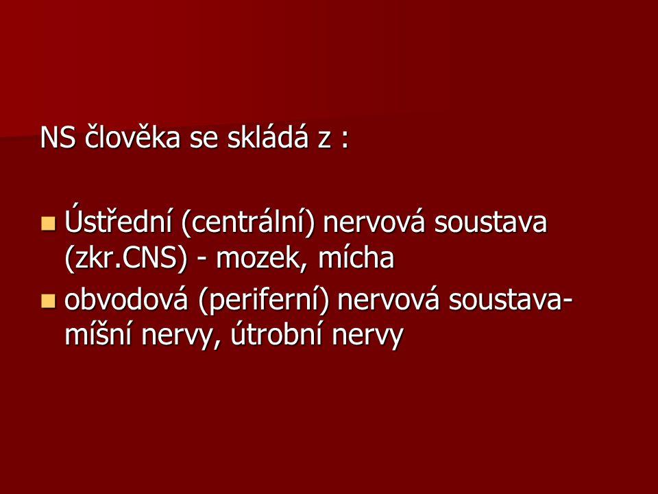 NS člověka se skládá z : Ústřední (centrální) nervová soustava (zkr.CNS) - mozek, mícha Ústřední (centrální) nervová soustava (zkr.CNS) - mozek, mícha