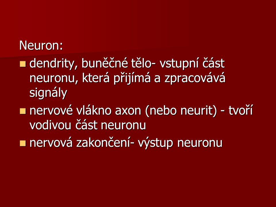 """Shrnutí Mozek se skládá z: Mozek se skládá z: prodloužené míchy, Varolova mostu, prodloužené míchy, Varolova mostu, mozečku, středního mozku, mezimozlku, koncového mozku Povrch mozku je pokryt Povrch mozku je pokryt šedou hmotou, uvnitř hmota bílá šedou hmotou, uvnitř hmota bílá Koncový mozek se skládá ze 2 Koncový mozek se skládá ze 2 hemisfér, hemisfér, z nichž každá osahuje 4 laloky, každý lalok má """"na starosti určitou funkci z nichž každá osahuje 4 laloky, každý lalok má """"na starosti určitou funkci"""