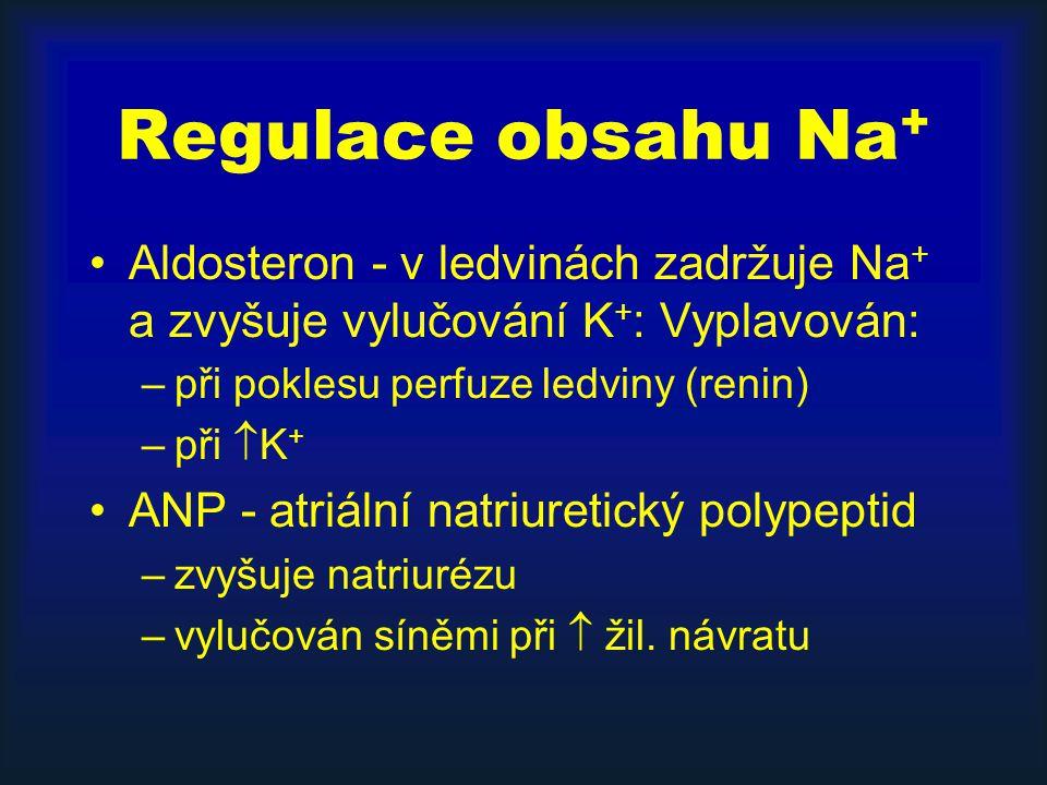 Regulace obsahu Na + Aldosteron - v ledvinách zadržuje Na + a zvyšuje vylučování K + : Vyplavován: –při poklesu perfuze ledviny (renin) –při  K + ANP - atriální natriuretický polypeptid –zvyšuje natriurézu –vylučován síněmi při  žil.