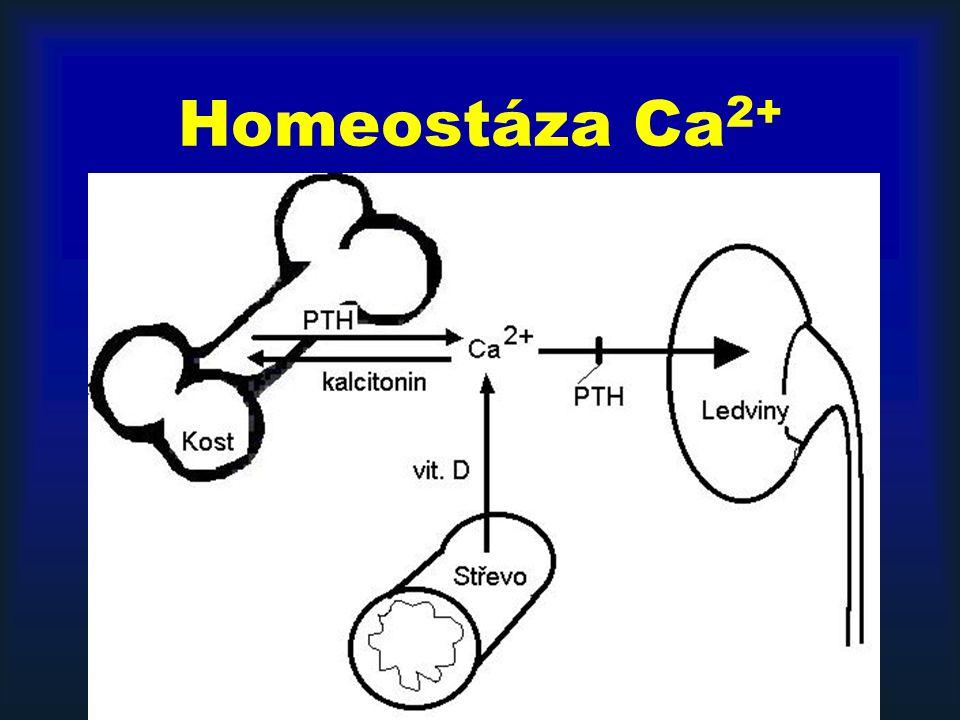 Homeostáza Ca 2+
