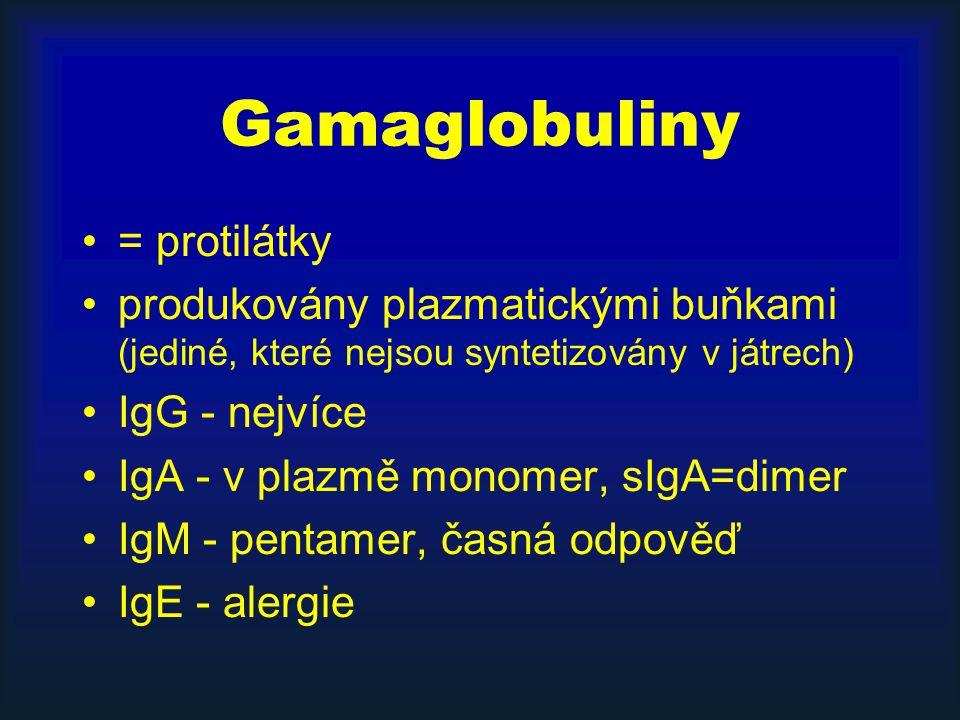Gamaglobuliny = protilátky produkovány plazmatickými buňkami (jediné, které nejsou syntetizovány v játrech) IgG - nejvíce IgA - v plazmě monomer, sIgA=dimer IgM - pentamer, časná odpověď IgE - alergie