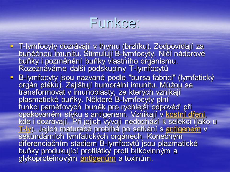 Funkce:  T-lymfocyty dozrávají v thymu (brzlíku). Zodpovídají za buněčnou imunitu. Stimulují B-lymfocyty. Ničí nádorové buňky i pozměnění buňky vlast