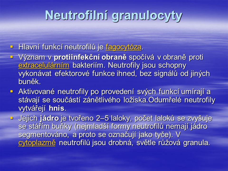 Neutrofilní granulocyty  Hlavní funkcí neutrofilů je fagocytóza. fagocytóza  Význam v protiinfekční obraně spočívá v obraně proti extracelulárním ba