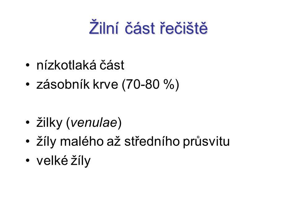 Žilky = Venuly průměr 0,2-1 mm tunica intima tenkátunica media - tenká tlustátunica adventitia (externa) - tlustá