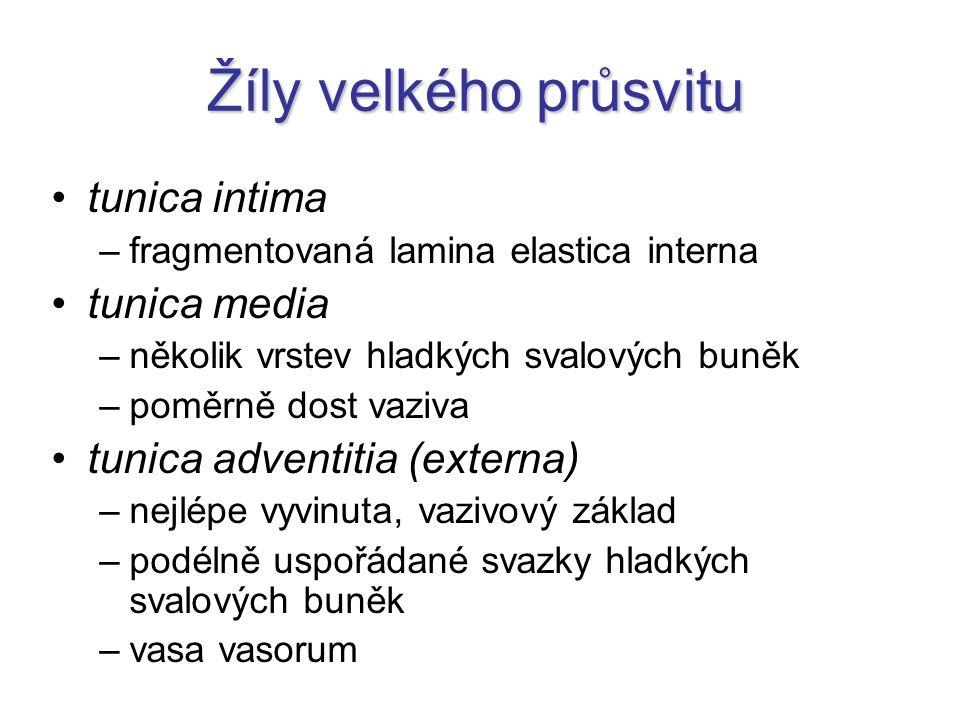 Skupiny přítoků vnitřní hrdelní žíly 6.