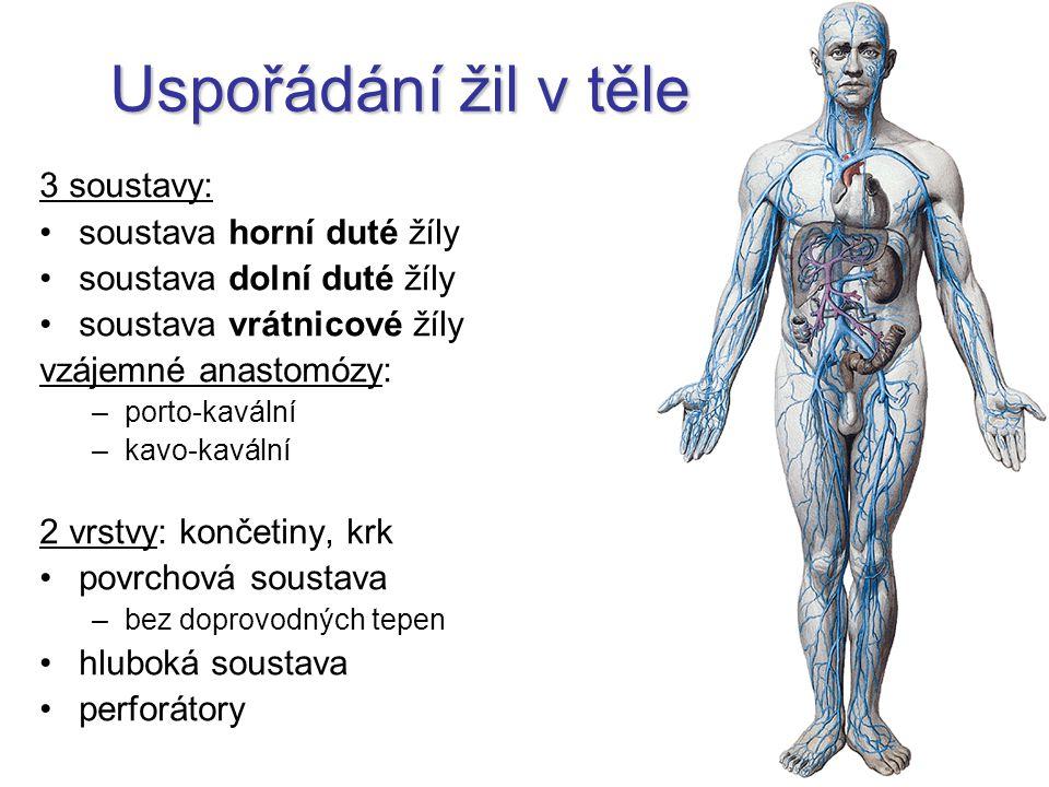 Sinus cavernosus po stranách tureckého sedla dutinky (mnoho chordae Willisi) mediálně: a.