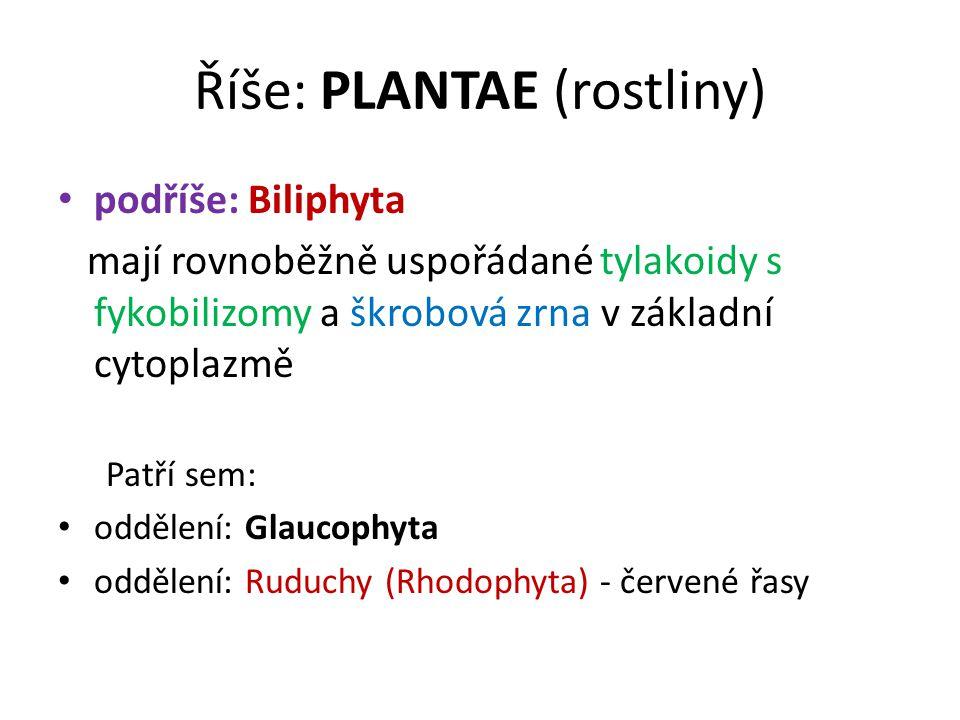Říše: PLANTAE (rostliny) podříše: Biliphyta mají rovnoběžně uspořádané tylakoidy s fykobilizomy a škrobová zrna v základní cytoplazmě Patří sem: oddělení: Glaucophyta oddělení: Ruduchy (Rhodophyta) - červené řasy