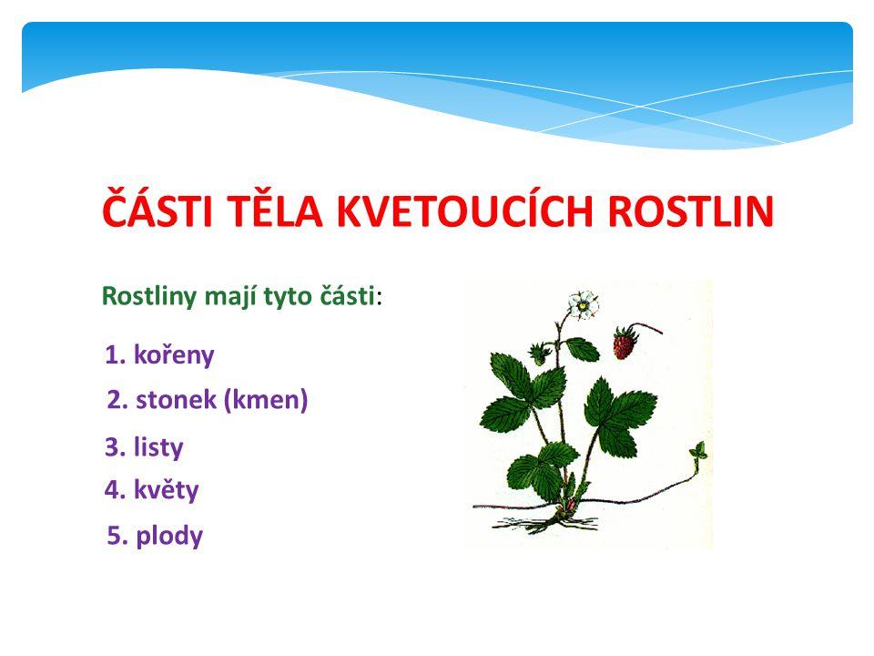ČÁSTI TĚLA KVETOUCÍCH ROSTLIN Rostliny mají tyto části: 1. kořeny 2. stonek (kmen) 3. listy 4. květy 5. plody