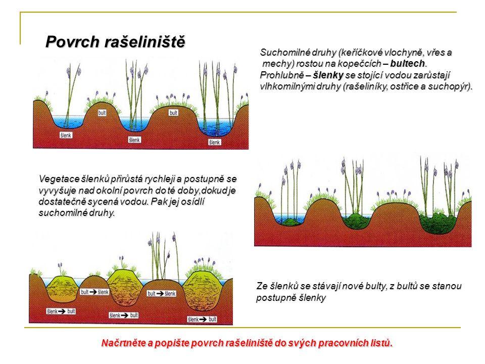 Suchomilné druhy (keříčkové vlochyně, vřes a mechy) rostou na kopečcích – bultech. mechy) rostou na kopečcích – bultech. Prohlubně – šlenky se stojící
