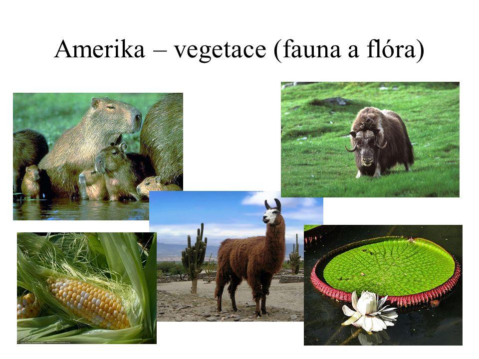 Amerika – vegetace (fauna a flóra)