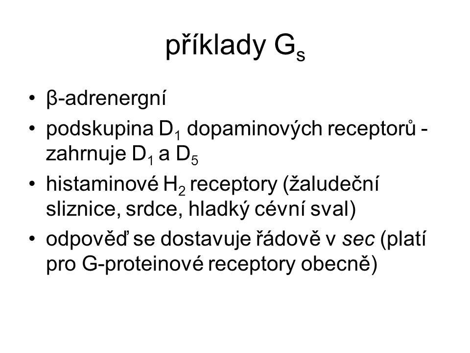 příklady G s β-adrenergní podskupina D 1 dopaminových receptorů - zahrnuje D 1 a D 5 histaminové H 2 receptory (žaludeční sliznice, srdce, hladký cévní sval) odpověď se dostavuje řádově v sec (platí pro G-proteinové receptory obecně)