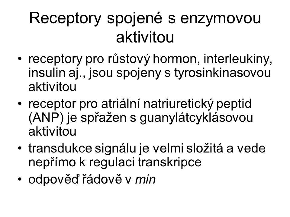 Receptory spojené s enzymovou aktivitou receptory pro růstový hormon, interleukiny, insulin aj., jsou spojeny s tyrosinkinasovou aktivitou receptor pro atriální natriuretický peptid (ANP) je spřažen s guanylátcyklásovou aktivitou transdukce signálu je velmi složitá a vede nepřímo k regulaci transkripce odpověď řádově v min
