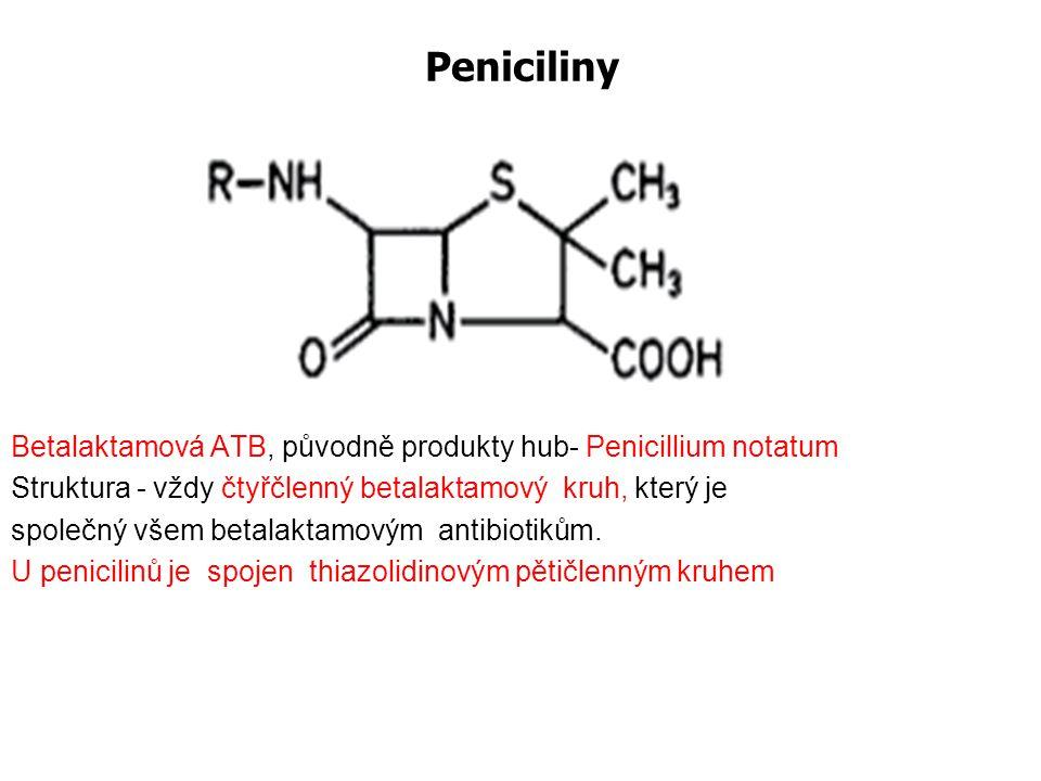 Peniciliny Betalaktamová ATB, původně produkty hub- Penicillium notatum Struktura - vždy čtyřčlenný betalaktamový kruh, který je společný všem betalak
