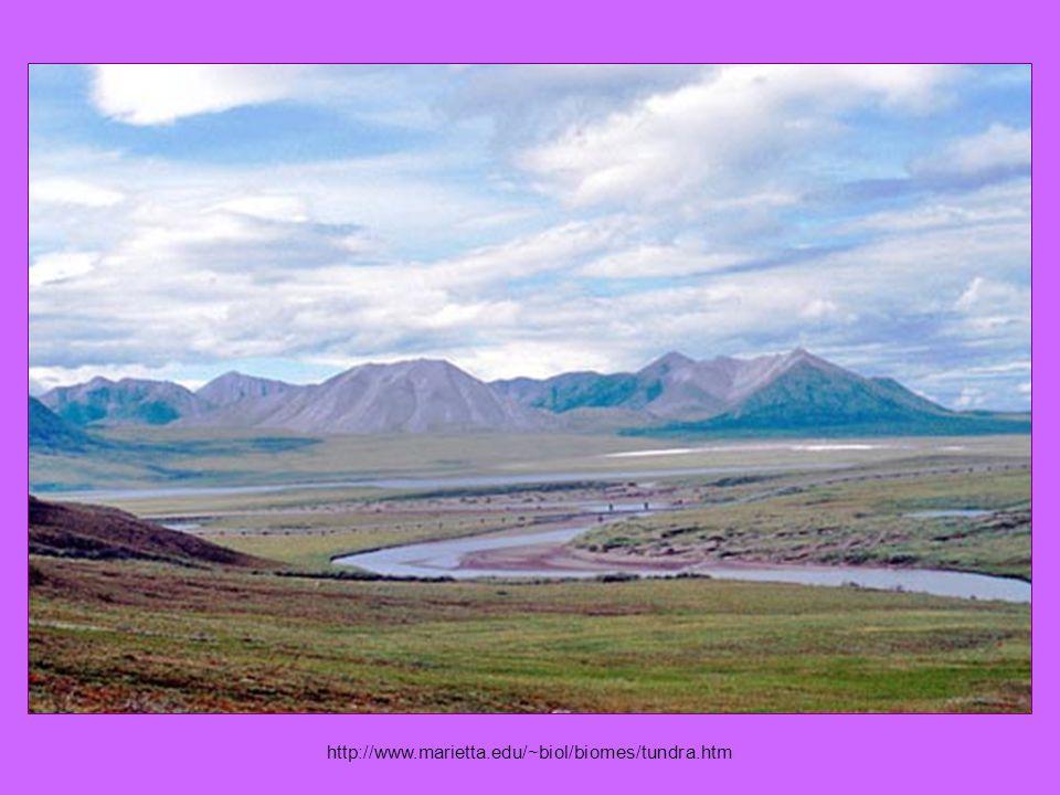 http://www.marietta.edu/~biol/biomes/tundra.htm
