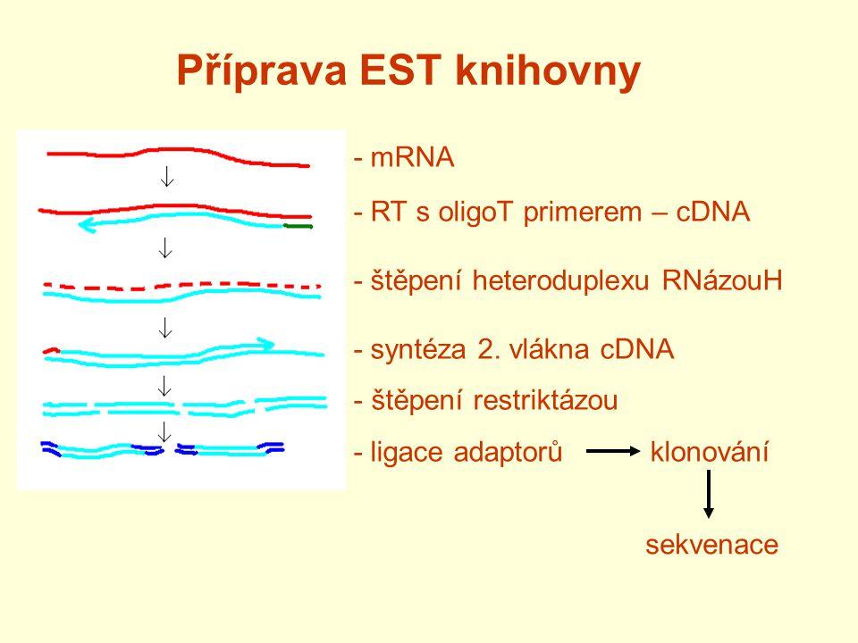 Příprava EST knihovny - mRNA - RT s oligoT primerem – cDNA - štěpení heteroduplexu RNázouH - syntéza 2. vlákna cDNA - štěpení restriktázou - ligace ad