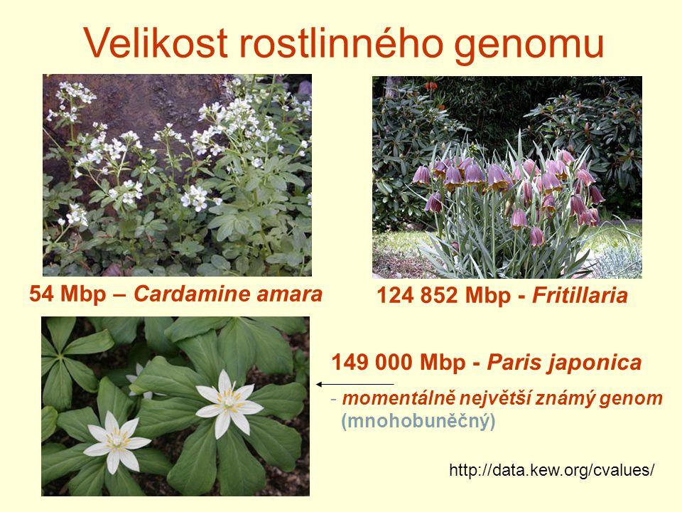 54 Mbp – Cardamine amara 124 852 Mbp - Fritillaria 149 000 Mbp - Paris japonica - momentálně největší známý genom (mnohobuněčný) http://data.kew.org/cvalues/ Velikost rostlinného genomu